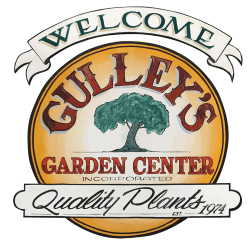 gulley's_COLOR